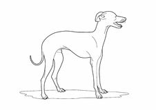 Drawing of a cute dog. Vector illustration of a dog, EPS 8 file Royalty Free Illustration