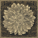 Drawing of dahlia flower on grunge background Stock Photography