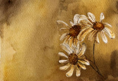 Drawing daisies. Watercolor brown background with white daisies vector illustration