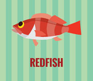Drawing of deep water redfish Stock Photography