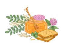 Drawing of dipper in glass jar of honey, pair of bread slices or toasts, clover flower and acacia inflorescence. Appetizing wholesome dessert. Colorful hand stock illustration
