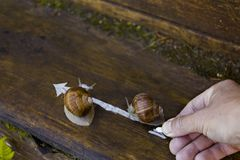 Drawing Direction For Snails Royalty Free Stock Images