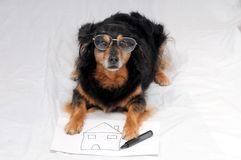 Drawing Dog. One Female Old Black Dog Drawing on a White Paper stock photo