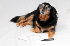 Drawing Dog. One Female Old Black Dog Drawing on a White Paper stock image