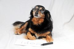 Drawing Dog. One Female Old Black Dog Drawing on a White Paper royalty free stock photography