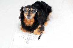 Drawing Dog. One Female Old Black Dog Drawing on a White Paper royalty free stock image