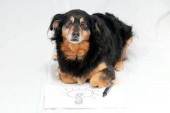 Drawing Dog stock illustration