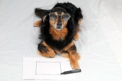 Drawing Dog. One Female Old Black Dog Drawing on a White Paper royalty free stock photos