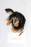 Drawing Dog. One Female Old Black Dog Drawing on a White Paper stock photos