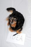 Drawing Dog. One Female Old Black Dog Drawing on a White Paper stock images