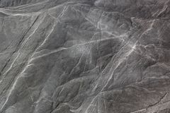 Drawing dog to the desert of Nazca. Beautiful drawing dog to the desert of Nazcawolf stock image