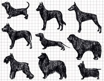 Drawing dogs Stock Images