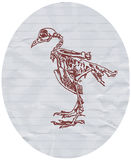 Drawing of dove skeleton Stock Photos