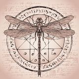 Drawing of dragonfly on an octagonal star Royalty Free Stock Image
