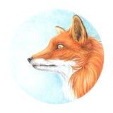 Drawing drawn colored pencils fox head stock illustration
