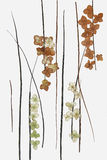 Drawing of dried fall leaves of plants  and branches. Elements on white watercolor paper background for scrapbook, painted wooden planks, object, roughage Stock Images