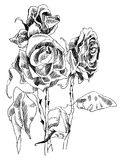 A drawing of dried roses. black and white picture. Black and white picture of dead dried flowers stock illustration