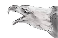 Drawing of eagle Stock Photos
