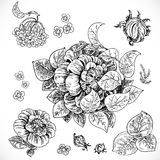 Drawing fantasy flowers and leaves graphic Royalty Free Stock Images