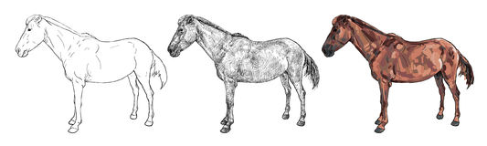 Drawing of female horse. Drawing the side of mare or female Thoroughbred  horse Royalty Free Stock Images