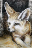 Drawing fennec fox Stock Images