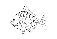 Drawing fish Stock Photography