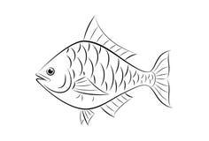 Drawing fish Stock Photography