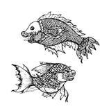 Drawing of  fish ,thai traditional art. Drawing of thai traditional art,fish from imagination on white Royalty Free Stock Image