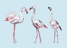 Drawing flamingos Royalty Free Stock Photos