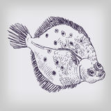 Drawing of a flounder Royalty Free Stock Image
