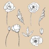 Drawing flowers. poppy flower clip-art. Or illustration Stock Photos