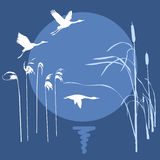 Drawing flying birds. Vector drawing flying birds on background sun Stock Images
