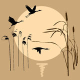 Drawing flying birds. On background sun Royalty Free Stock Photography