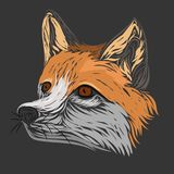 Drawing a fox on a gray background, logo Royalty Free Stock Images