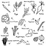 Drawing free hand of vegetables sketch in black doodle on white background. Drawing free hand vector eps 10 of vegetables sketch Royalty Free Stock Images