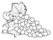 Drawing of Grapes. Illustration of stylized grapes and leaves Royalty Free Stock Photos