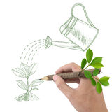 Drawing green plant and watering can. Royalty Free Stock Images