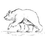 Drawing of a grizzly bear Stock Images