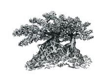 Bonsai with branches and leaves. Drawing by hand, sketchy graphics Stock Photo
