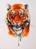Drawing head of tiger Royalty Free Stock Images
