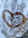 Drawing hearts in the snow on a tree. Drawing hearts in the snow. Snow heart shape. Heart on the snow closeup Royalty Free Stock Images