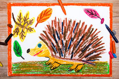 Drawing -  hedgehog and autumn leaves Stock Photography