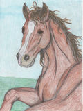 Drawing of a horse royalty free stock photos