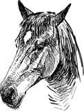 Drawing a horses head vector illustration
