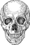 Drawing of human skull Royalty Free Stock Photo