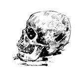 Drawing human skull on white Stock Photos