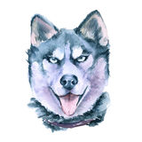 Drawing Husky breeds. Isolated on white background. stock illustration