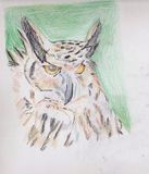 An interesting Owl. Drawing of an interesting Owl Royalty Free Stock Photo