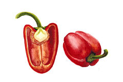 Drawing  isolate  juicy red pepper watercolor illustration Royalty Free Stock Photos