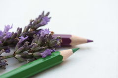 Drawing lavender Royalty Free Stock Photo